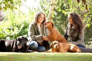Professional advertising photography shot showing two girls, with three dogs, sat in a field with trees and branches in the background. Shot by professional northeast advertising photographer Cal Carey.